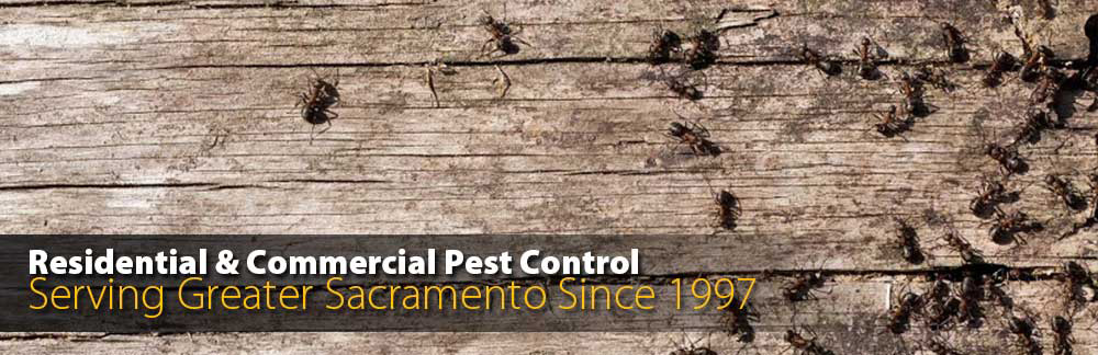 We Handle All Types of Pests! Rodents, Spiders, Ants, Cockroaches and More